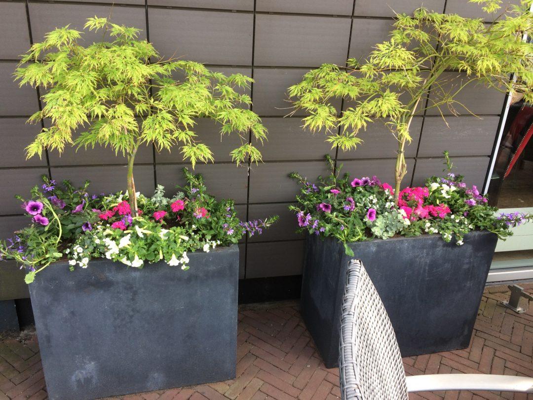 Plantenbakken terras Restaurant de Brugwachter